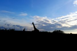 Femmehub Giraffe