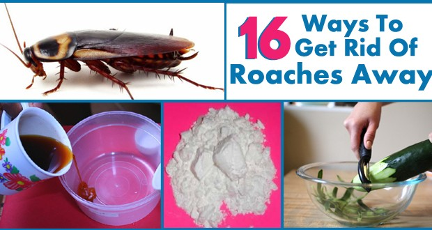 Get Rid Of Roaches Permanently 620x330